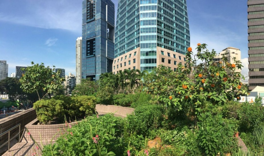 Urban gardeners changing Singapore: Get into the grow your own movement