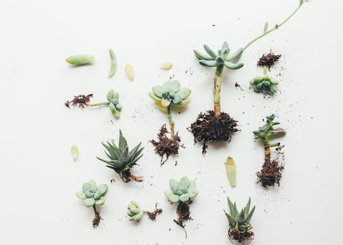 What You Need To Know About Caring For Succulents Honeycombers