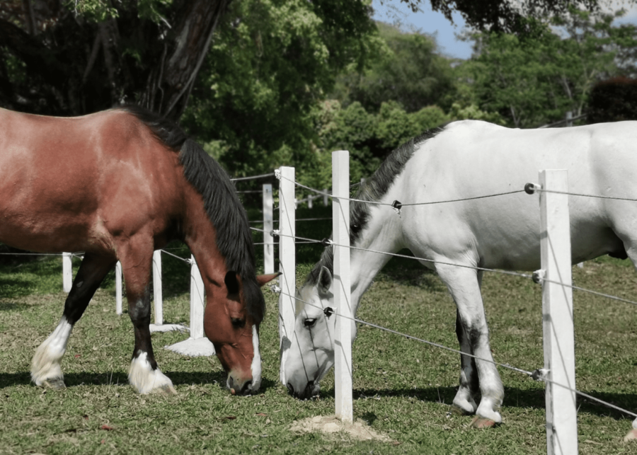 bukit timah saddle club | places in singapore overseas