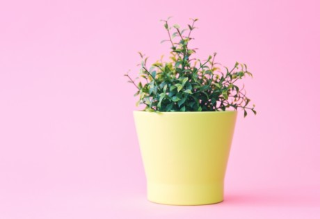 indoor plants for Hong Kong apartments yellow pot with plant